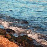 日本の海が磯臭い原因!どうしてハワイは臭わないの!?